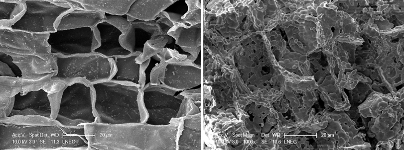 Imagem d microscópio eletrónico