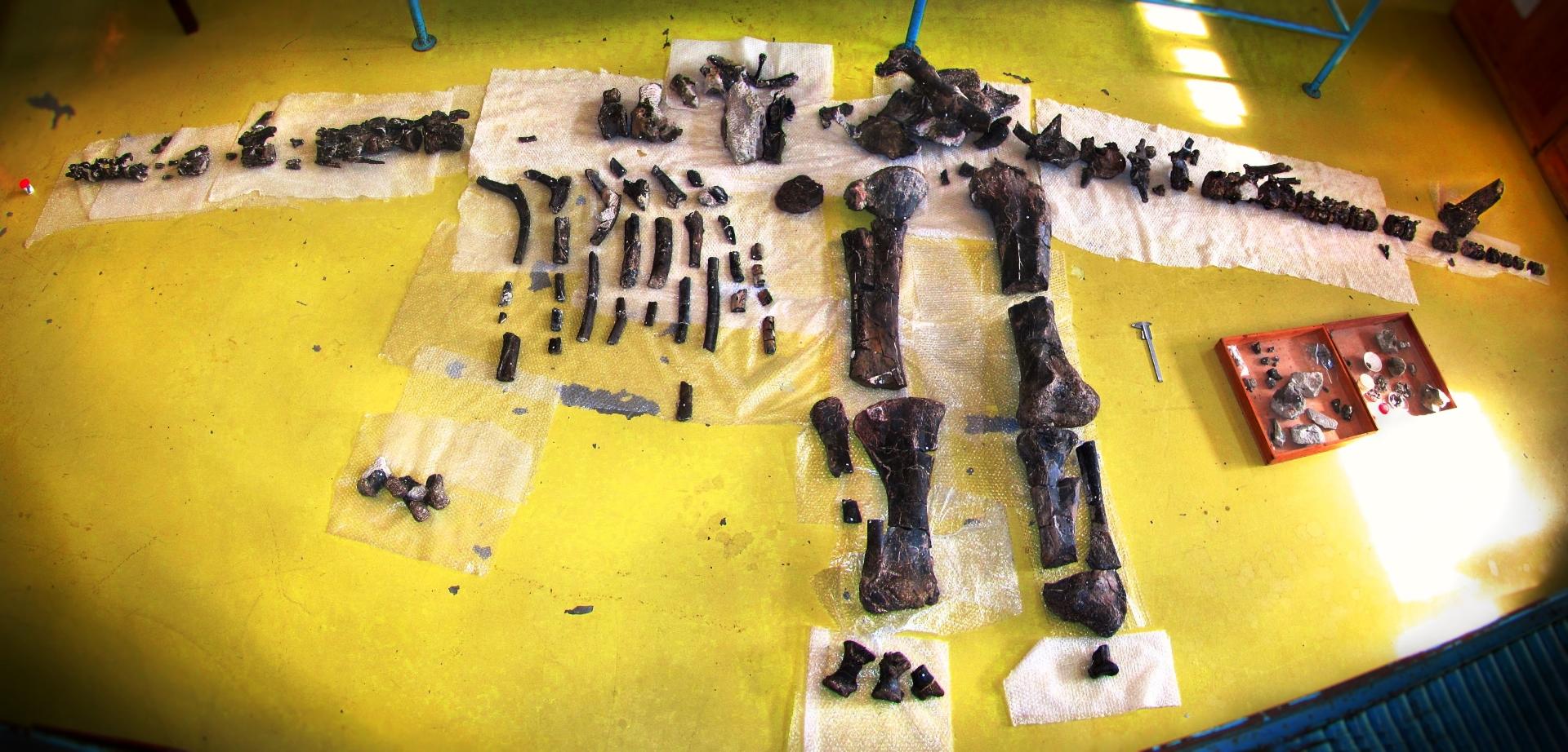 Estegossauro de Atouguia da Baleia