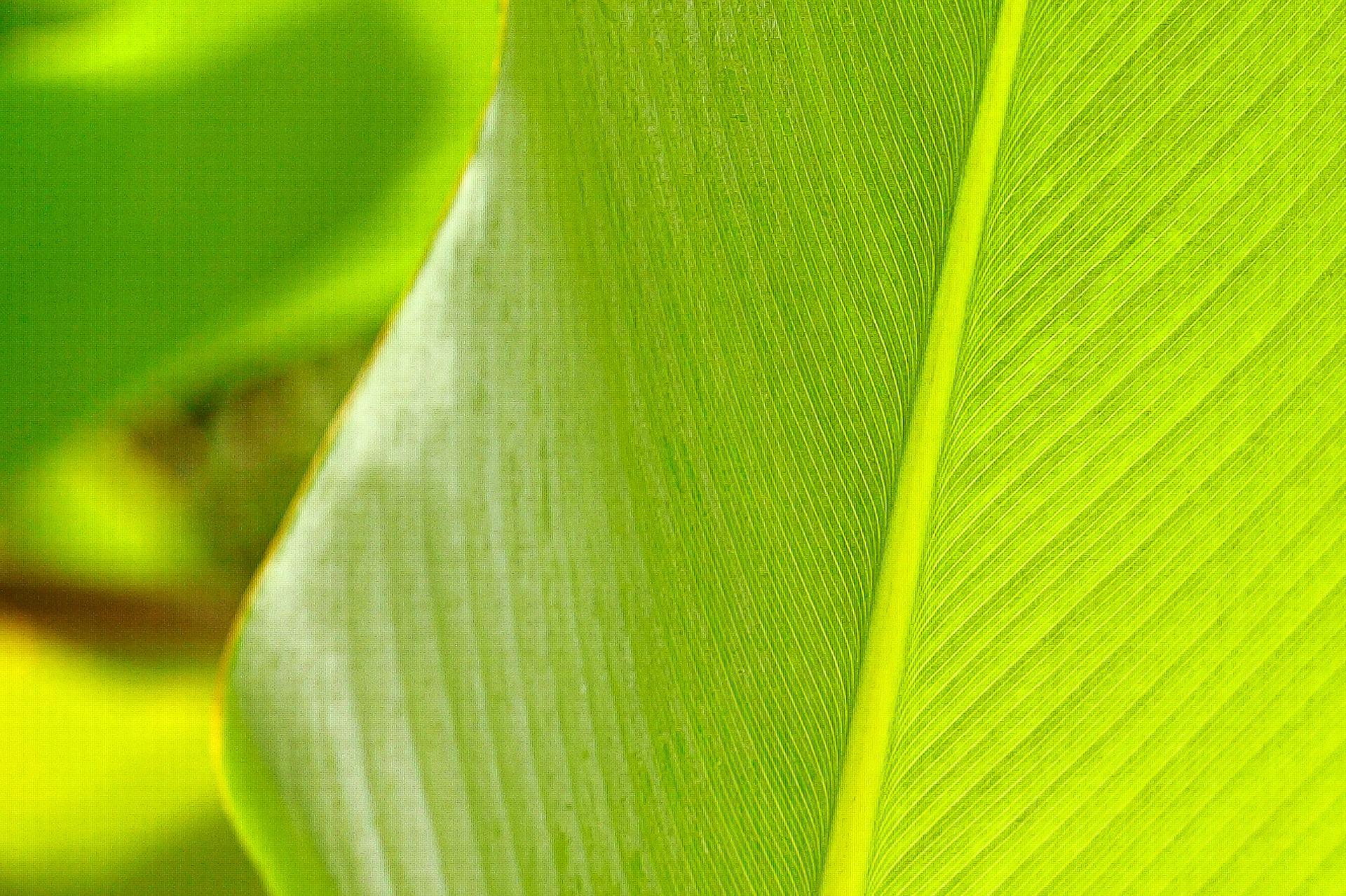 Imagem decorativa - Folha verde
