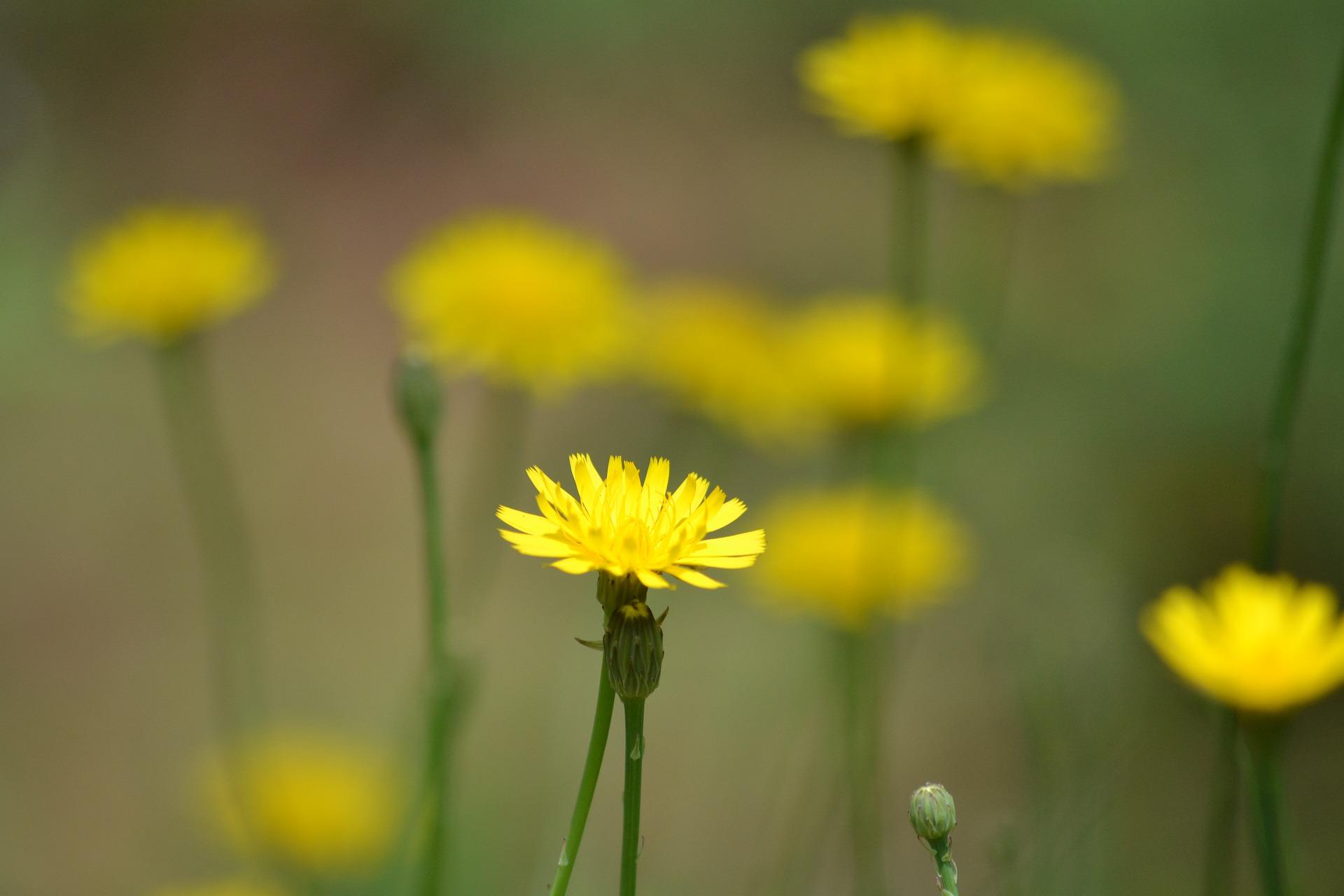 Imagem decorativa com flores amarelas